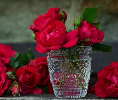بالصور خواطر عن الورد , معاني واحاسيس للورد 5224 1
