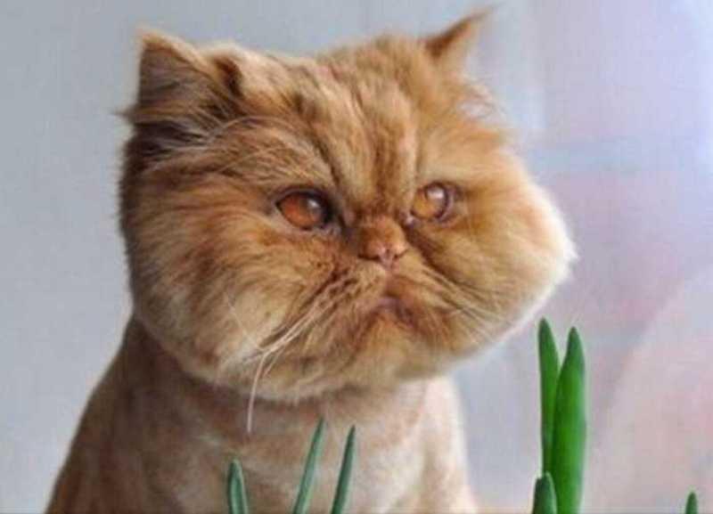 بالصور قطط جميلة , اجمل القطط التى يمكن ان تراها عينك 5991 2