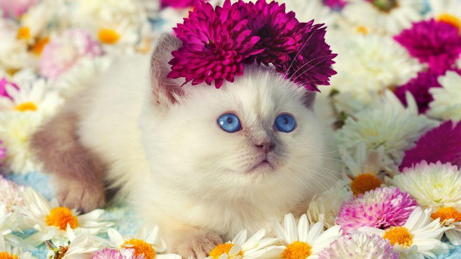 بالصور قطط جميلة , اجمل القطط التى يمكن ان تراها عينك 5991 4