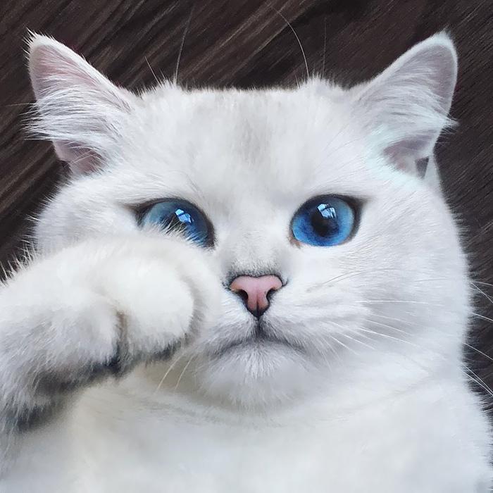 بالصور قطط جميلة , اجمل القطط التى يمكن ان تراها عينك 5991 6