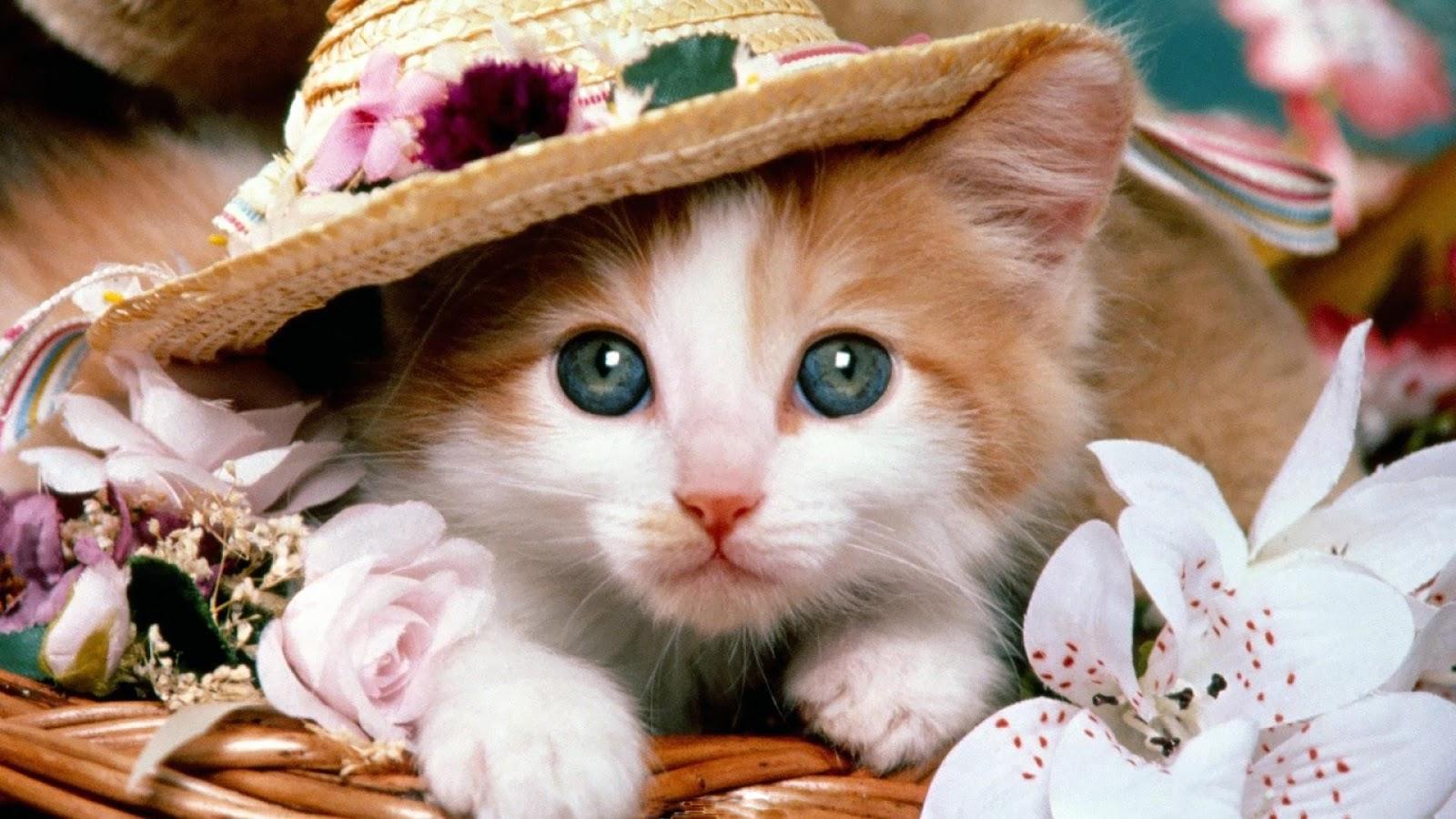 بالصور قطط جميلة , اجمل القطط التى يمكن ان تراها عينك 5991 9