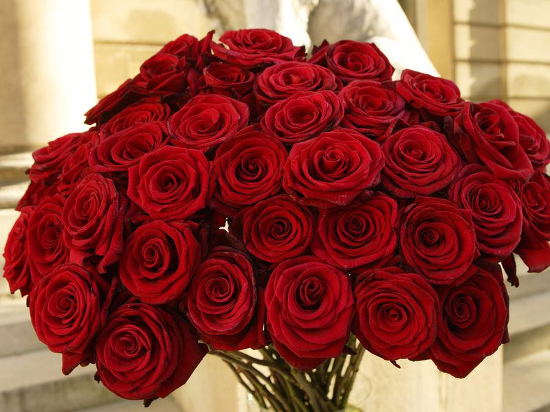 صور باقات ورود , اجمل اشكال والوان باقات الورود
