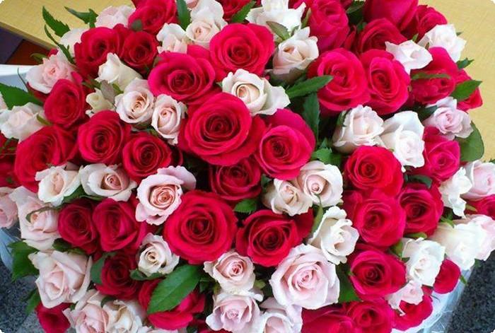 بالصور صور ورود جميله , اجمل اشكال والوان الورود 6250 1
