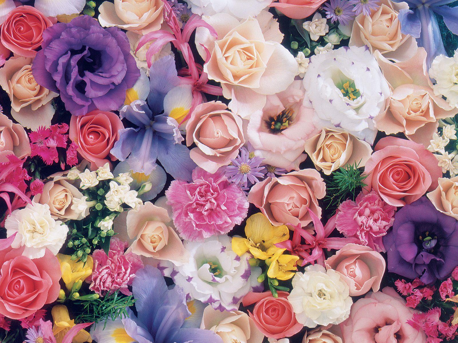 بالصور صور ورود جميله , اجمل اشكال والوان الورود 6250 3