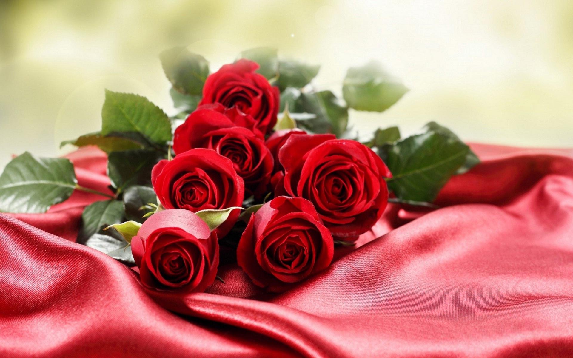 صور صور ورود جميله , اجمل اشكال والوان الورود