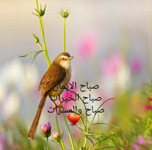 بالصور اجمل رسائل الصباح , صباح الخير بالصور للاصدقاء 2705 10