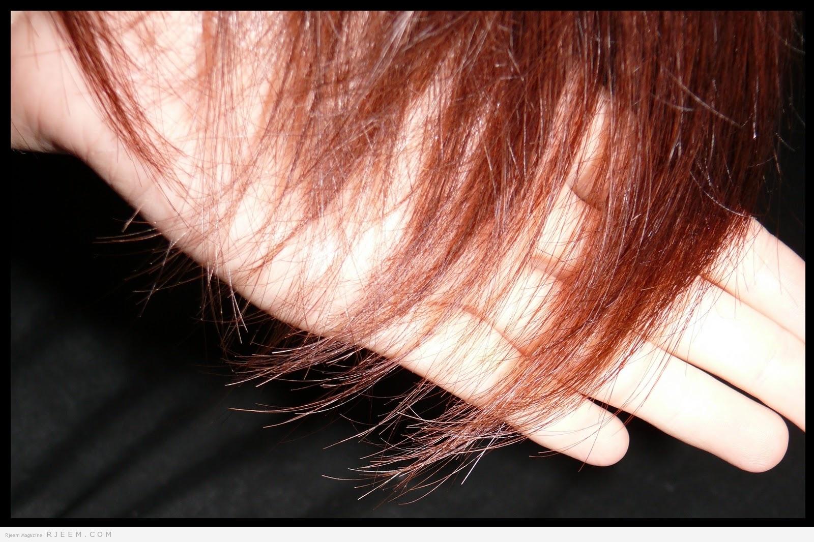 صورة خلطات للشعر الجاف , افضل خلطه علاج لجفاف الشعر