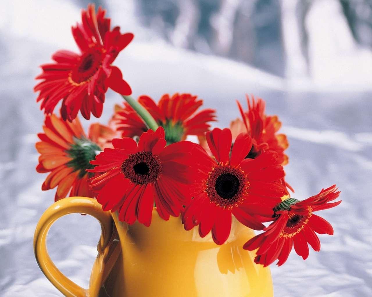 بالصور صور زهور جميلة , افضل الصور للزهور الجميلة 4708 1