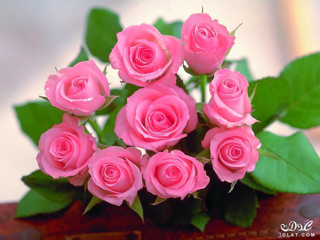 بالصور صور زهور جميلة , افضل الصور للزهور الجميلة 4708 2