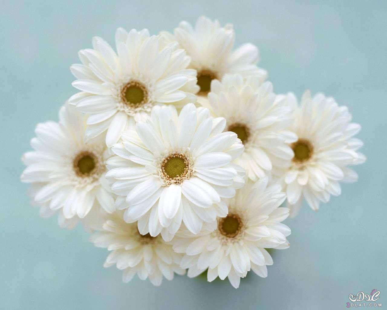 بالصور صور زهور جميلة , افضل الصور للزهور الجميلة 4708 4
