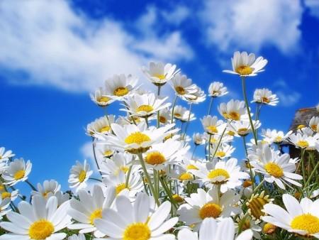 بالصور صور زهور جميلة , افضل الصور للزهور الجميلة 4708 5