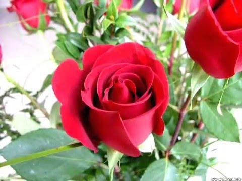 بالصور صور زهور جميلة , افضل الصور للزهور الجميلة 4708 7