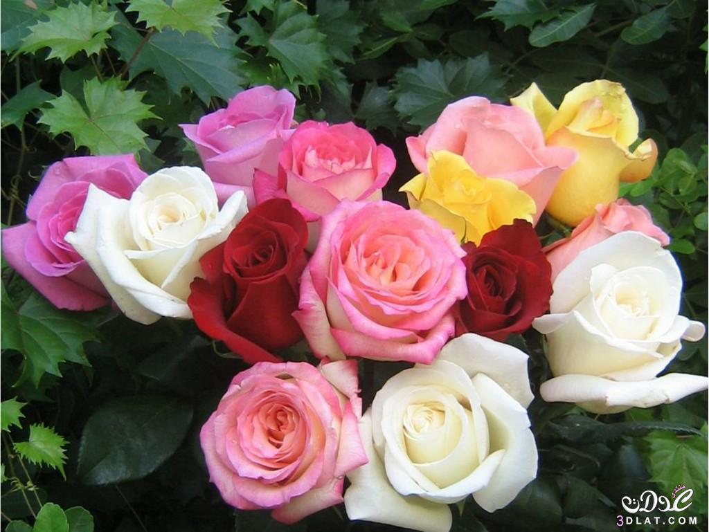 بالصور صور زهور جميلة , افضل الصور للزهور الجميلة 4708