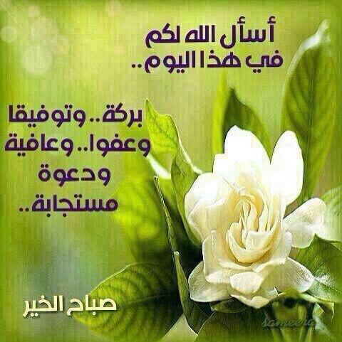 صورة صباح البركة , افضل الصور لكلمة صباح البركة وصباح الفل