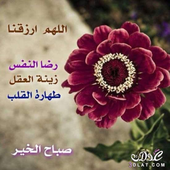 بالصور صباح البركة , افضل الصور لكلمة صباح البركة وصباح الفل 4736 10