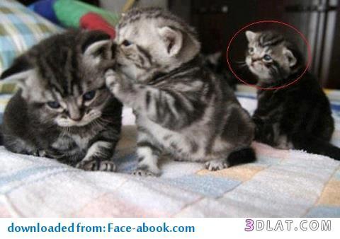 صور صور قطط مضحكة , شاهد افضل الصور المضحكة للقطط الان