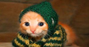 صوره صور قطط مضحكة , شاهد افضل الصور المضحكة للقطط الان