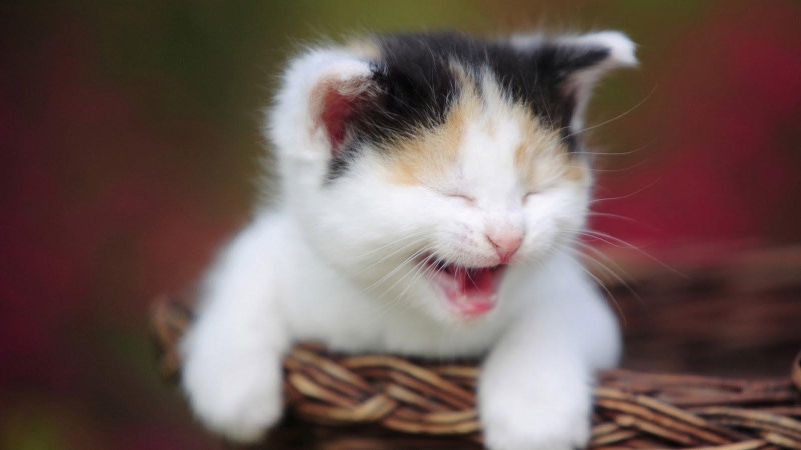 بالصور صور قطط مضحكة , شاهد افضل الصور المضحكة للقطط الان 5065 3