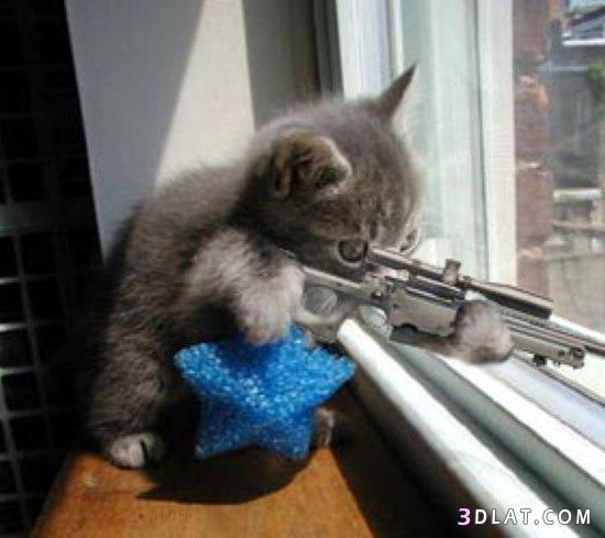 بالصور صور قطط مضحكة , شاهد افضل الصور المضحكة للقطط الان 5065 4