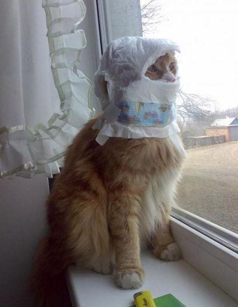 بالصور صور قطط مضحكة , شاهد افضل الصور المضحكة للقطط الان 5065 5