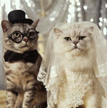 بالصور صور قطط مضحكة , شاهد افضل الصور المضحكة للقطط الان 5065 6