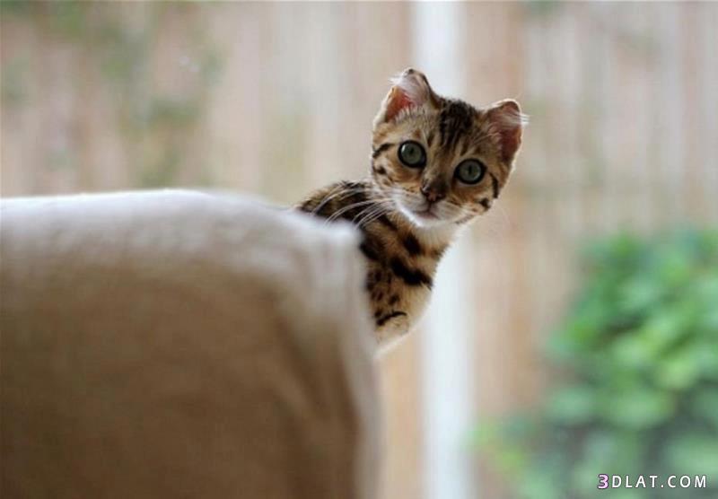 بالصور صور قطط مضحكة , شاهد افضل الصور المضحكة للقطط الان 5065 7