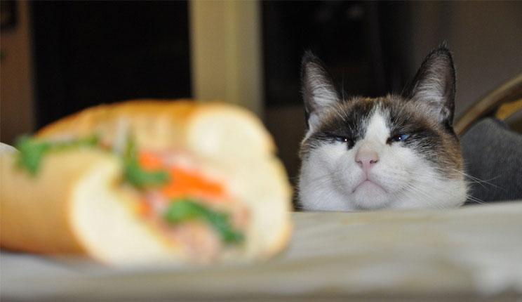 بالصور صور قطط مضحكة , شاهد افضل الصور المضحكة للقطط الان 5065 8