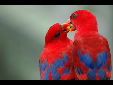 بالصور اجمل الطيور في العالم , طيور جميلة جدا 5394 1