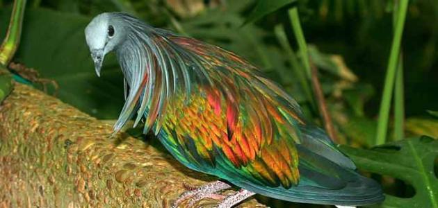 بالصور اجمل الطيور في العالم , طيور جميلة جدا 5394 2