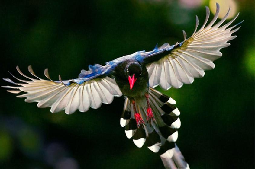 بالصور اجمل الطيور في العالم , طيور جميلة جدا 5394 3