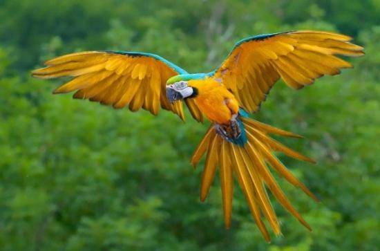 بالصور اجمل الطيور في العالم , طيور جميلة جدا 5394 4