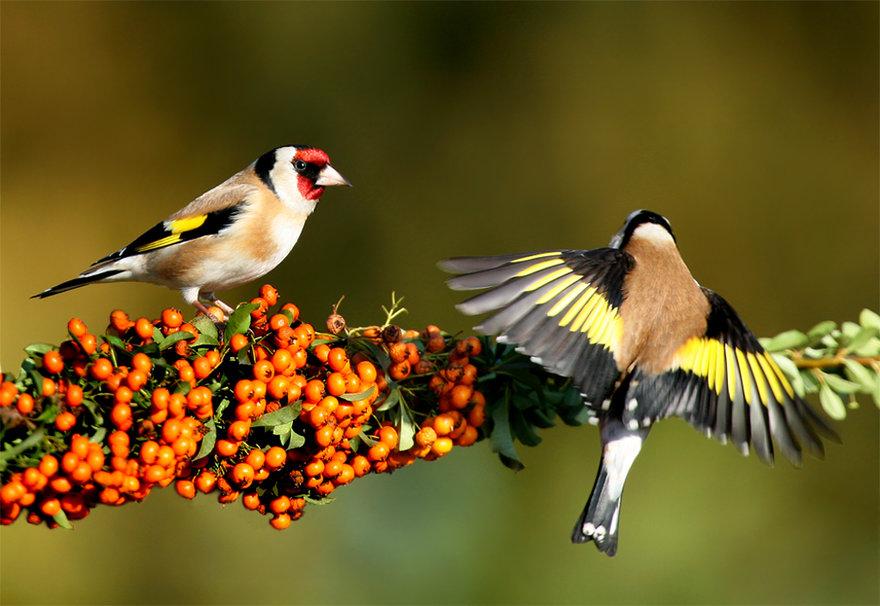 بالصور اجمل الطيور في العالم , طيور جميلة جدا 5394 5