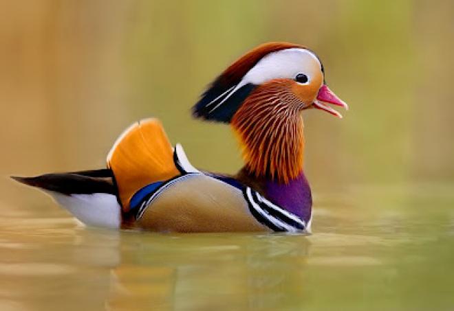 بالصور اجمل الطيور في العالم , طيور جميلة جدا 5394 7