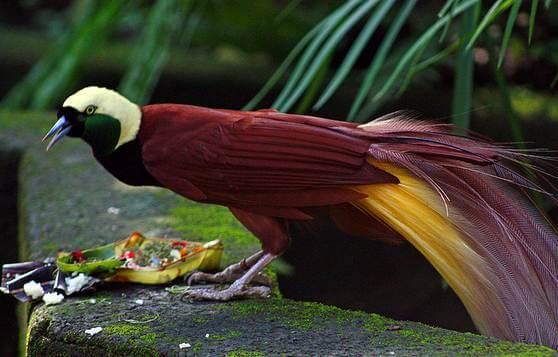 بالصور اجمل الطيور في العالم , طيور جميلة جدا 5394 9