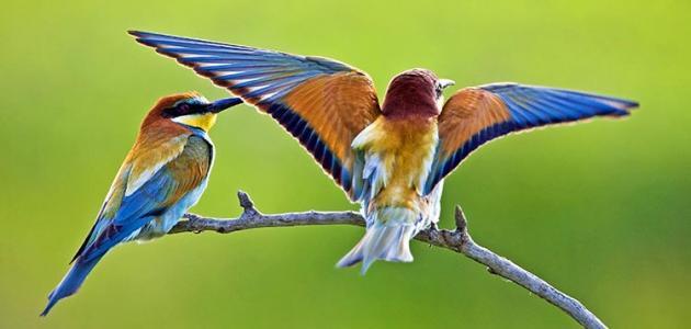 بالصور اجمل الطيور في العالم , طيور جميلة جدا 5394