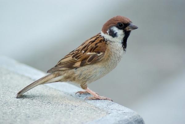 بالصور صور طيور , صور متنوعة للطيور 5688 10