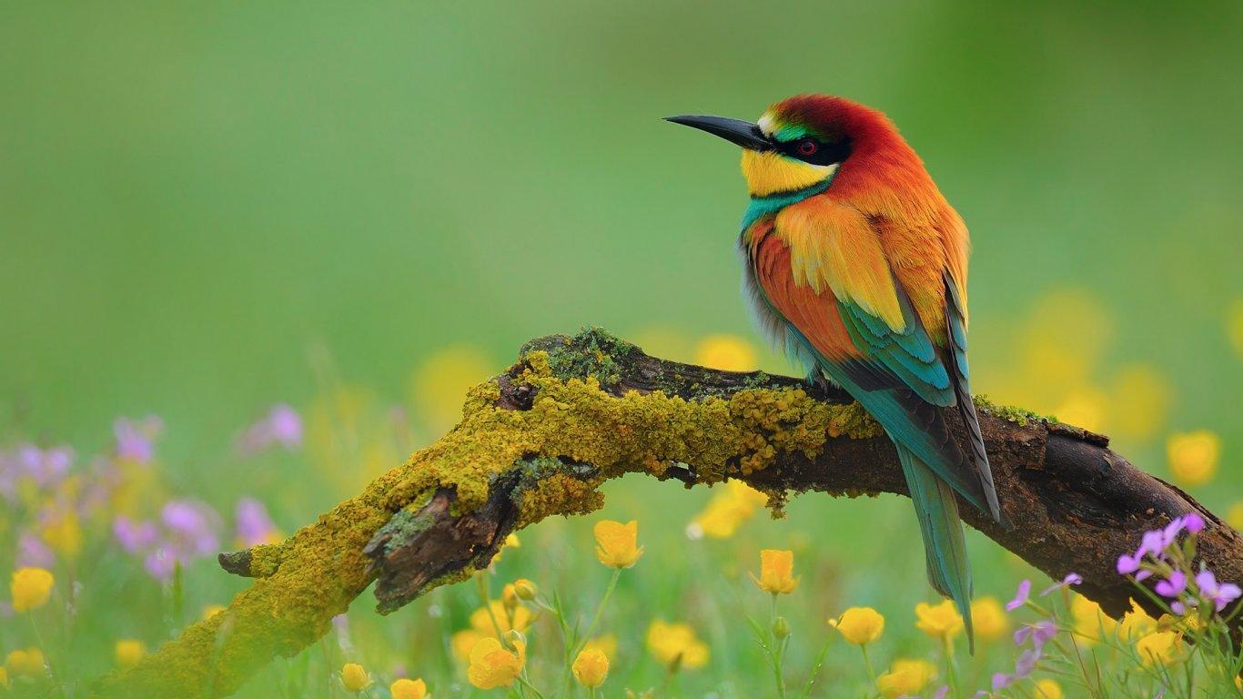 بالصور صور طيور , صور متنوعة للطيور 5688 2