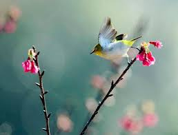 بالصور صور طيور , صور متنوعة للطيور 5688 3