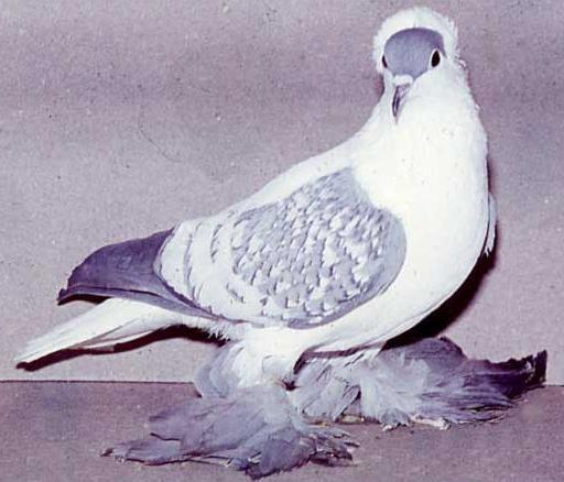 بالصور صور طيور , صور متنوعة للطيور 5688 4