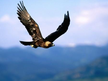 بالصور صور طيور , صور متنوعة للطيور 5688 5
