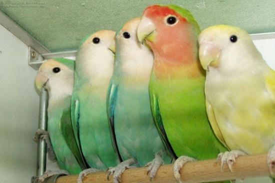 بالصور صور طيور , صور متنوعة للطيور 5688 6