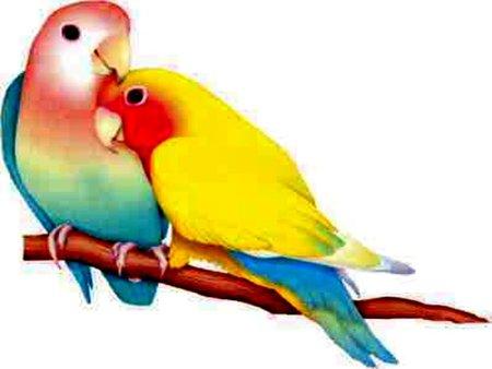 بالصور صور طيور , صور متنوعة للطيور 5688 7