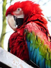 بالصور صور طيور , صور متنوعة للطيور 5688 9