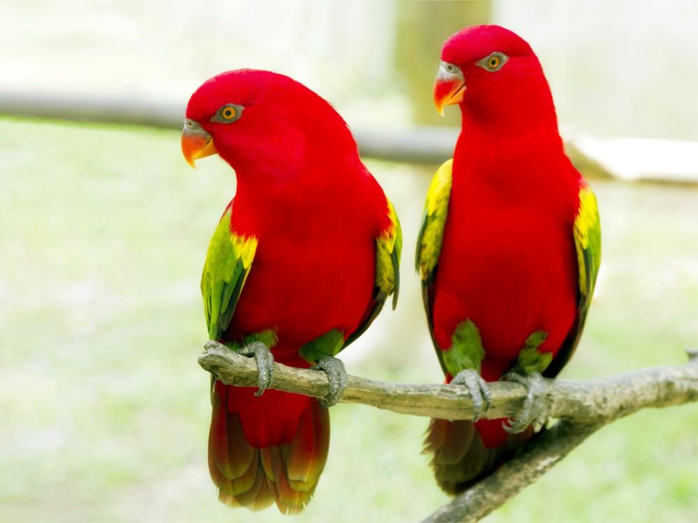 بالصور صور طيور , صور متنوعة للطيور 5688