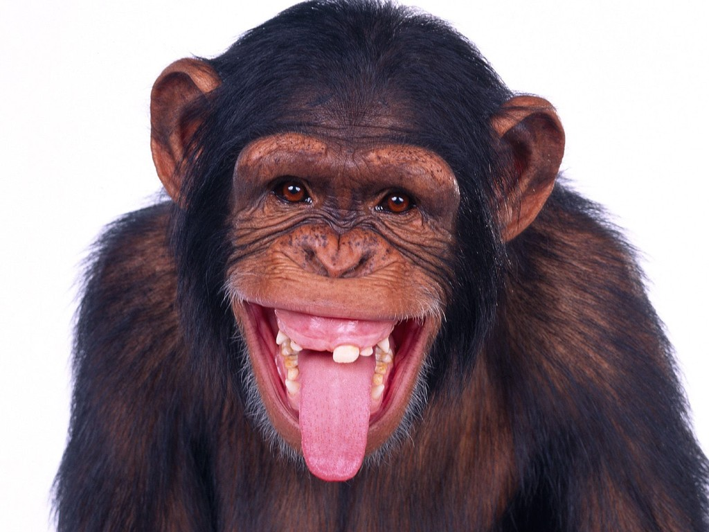 بالصور تنزيل صور مضحكه , للضحك والترفيه اليك اجمل الصور 5873 6