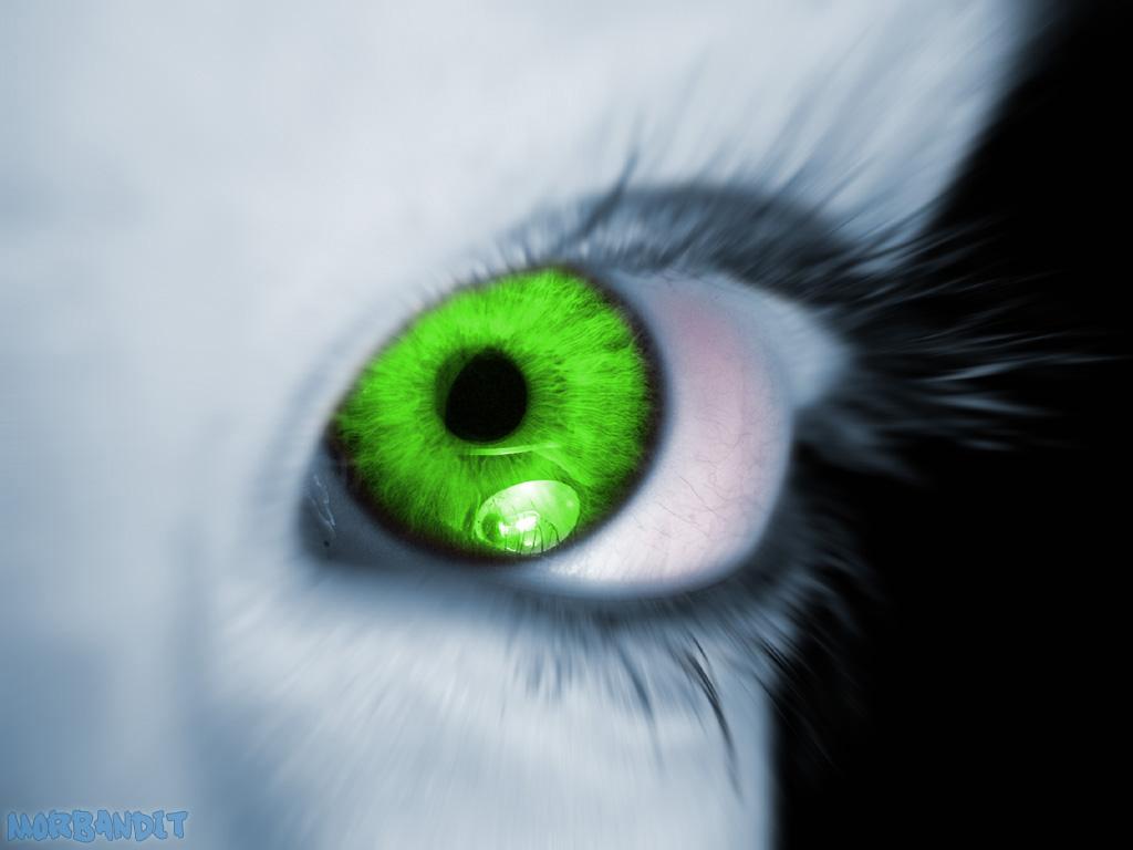 بالصور الحسد والعين , الحسد واضراره على الانسان 5943 1