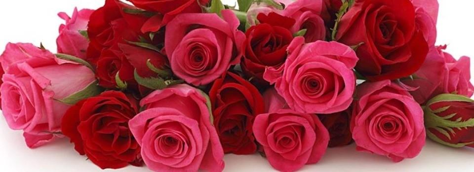 بالصور اجمل بوكيه ورد فى الدنيا , جمال الورد واشكاله والوانه 5947 9
