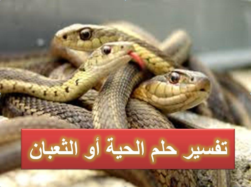 صور الثعابين في المنام , تفسير رؤيتك للثعابين فى المنام