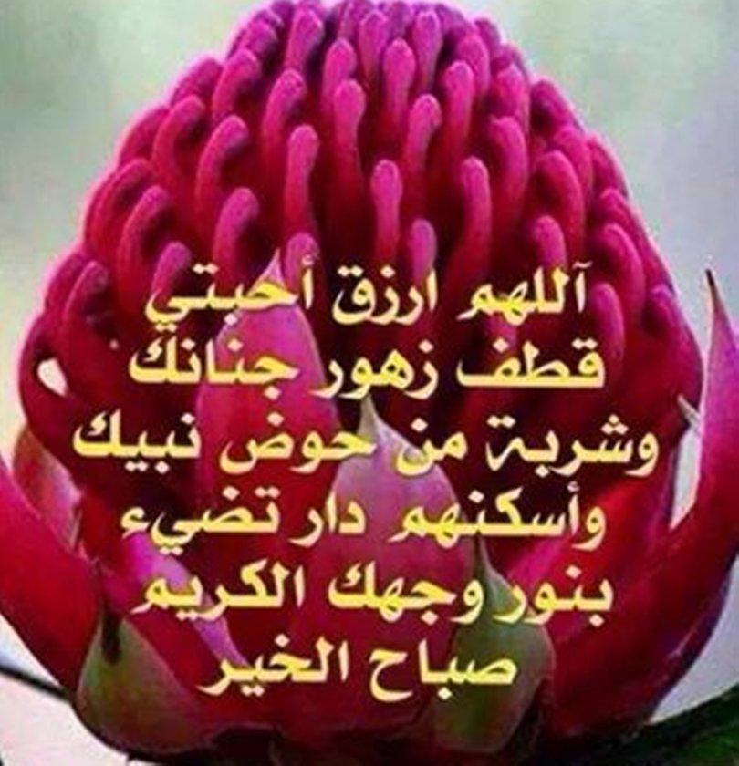 صورة حكم عن الورد , الورد وجماله وروعته