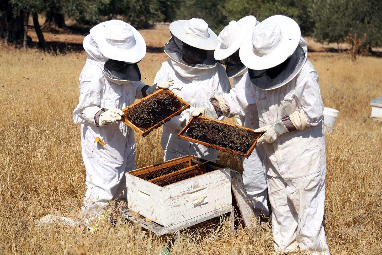 صوره تربية النحل , تعلم كيف تقوم بتربيه النحل